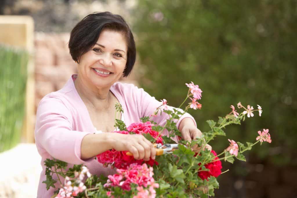 Hispanic woman planting in flower pots